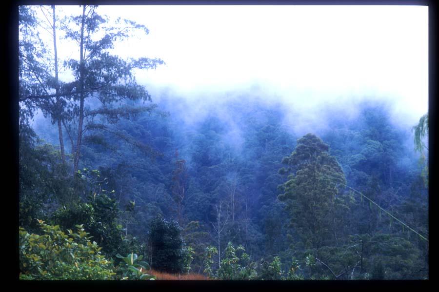 パプアニューギニア(2)